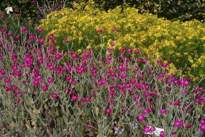 Der Anblick farbenprächtiger Pflanzen macht Lust auf die Gartenzeit